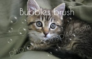 a lovely cat with bubbles