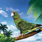 beautiful parrot on a tree