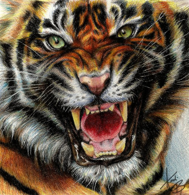 tiger traditional drawing